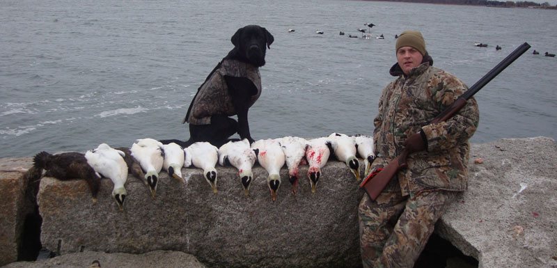 cape cod duck hunting